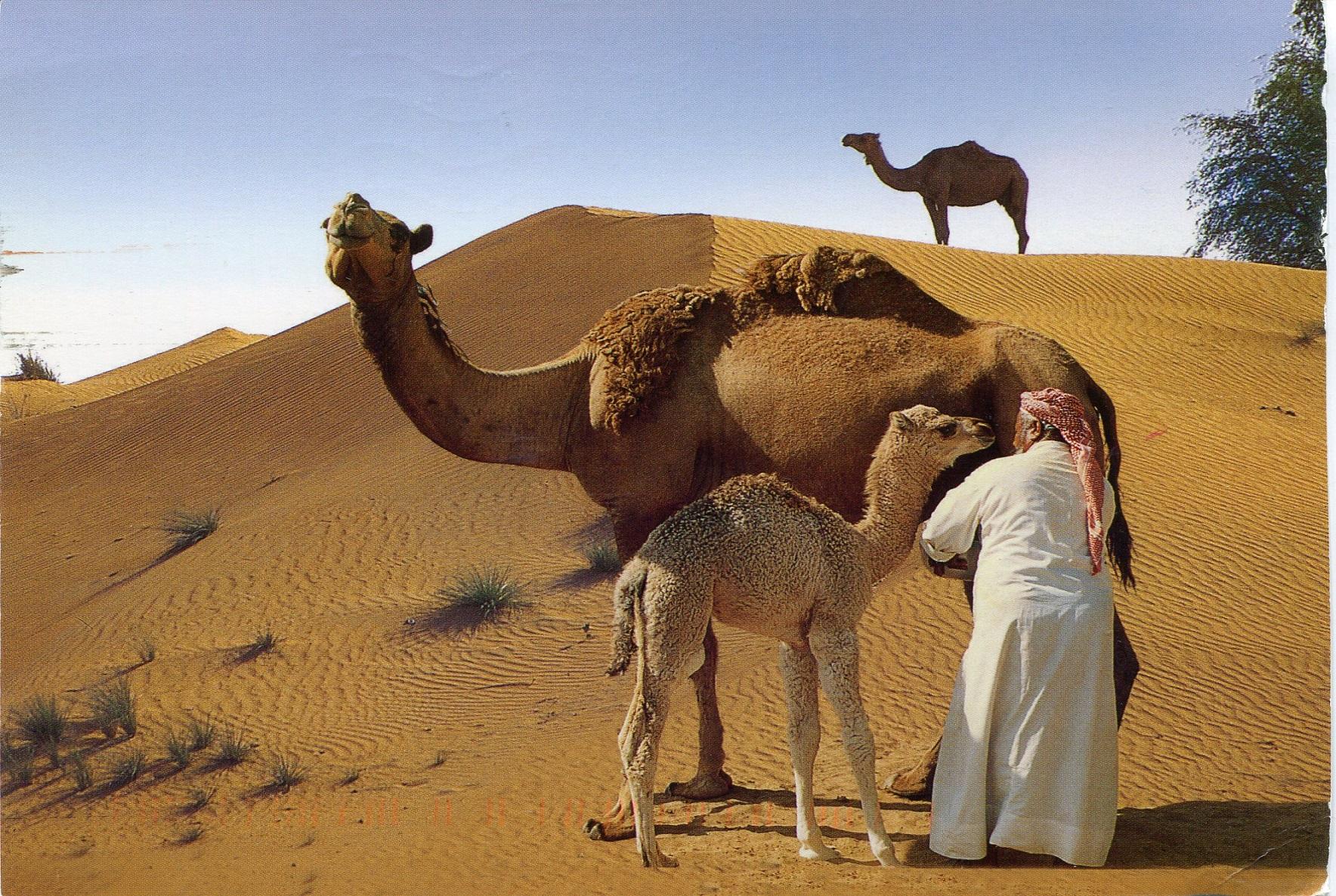 Costa: Araabia Ühendemiraadid, Omaan, Katar