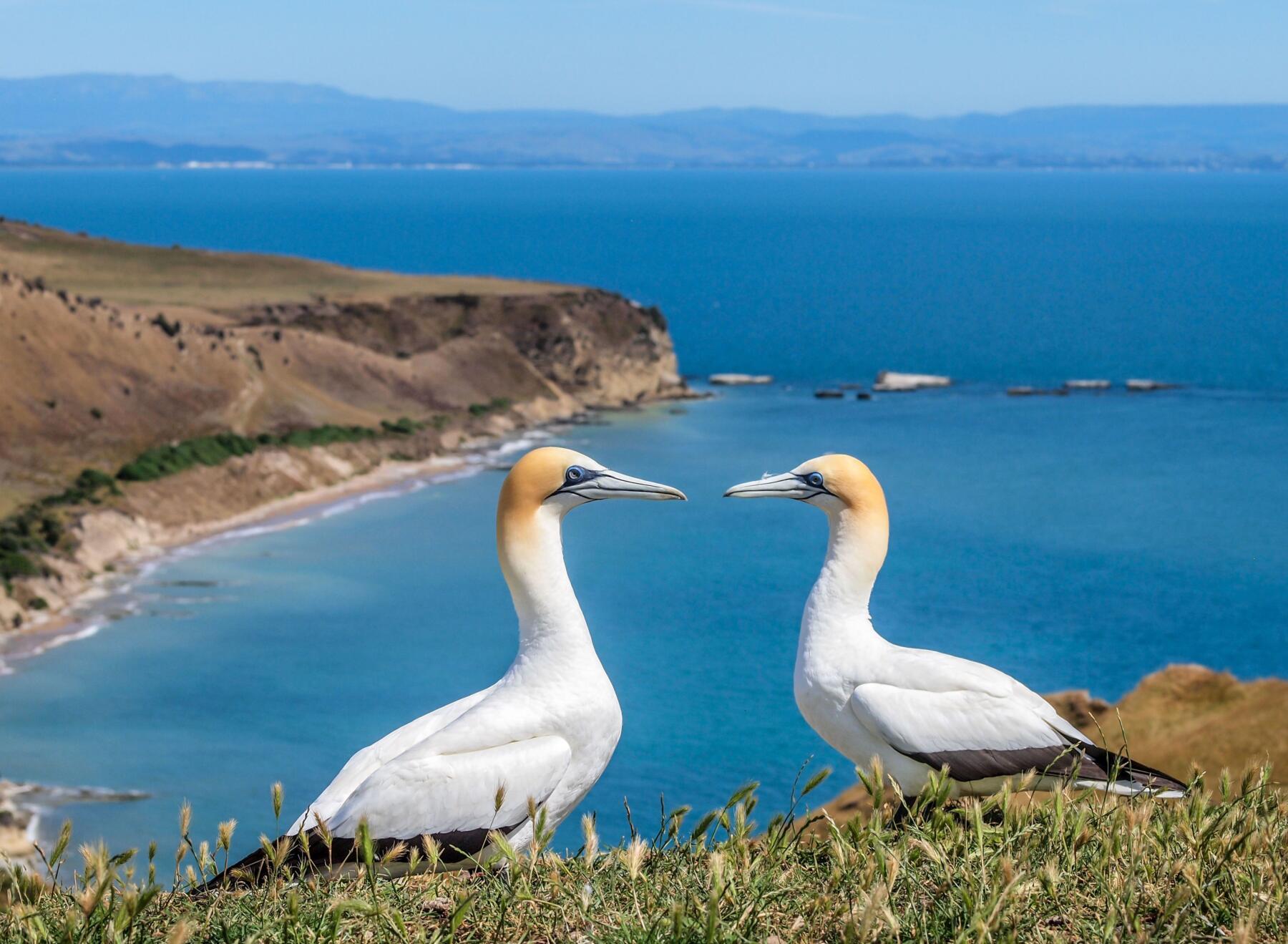 Serenade of the Seas Austraalia ja Uus-Meremaa 2020-2021